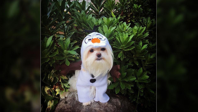 Olaf Pet Halloween Costume