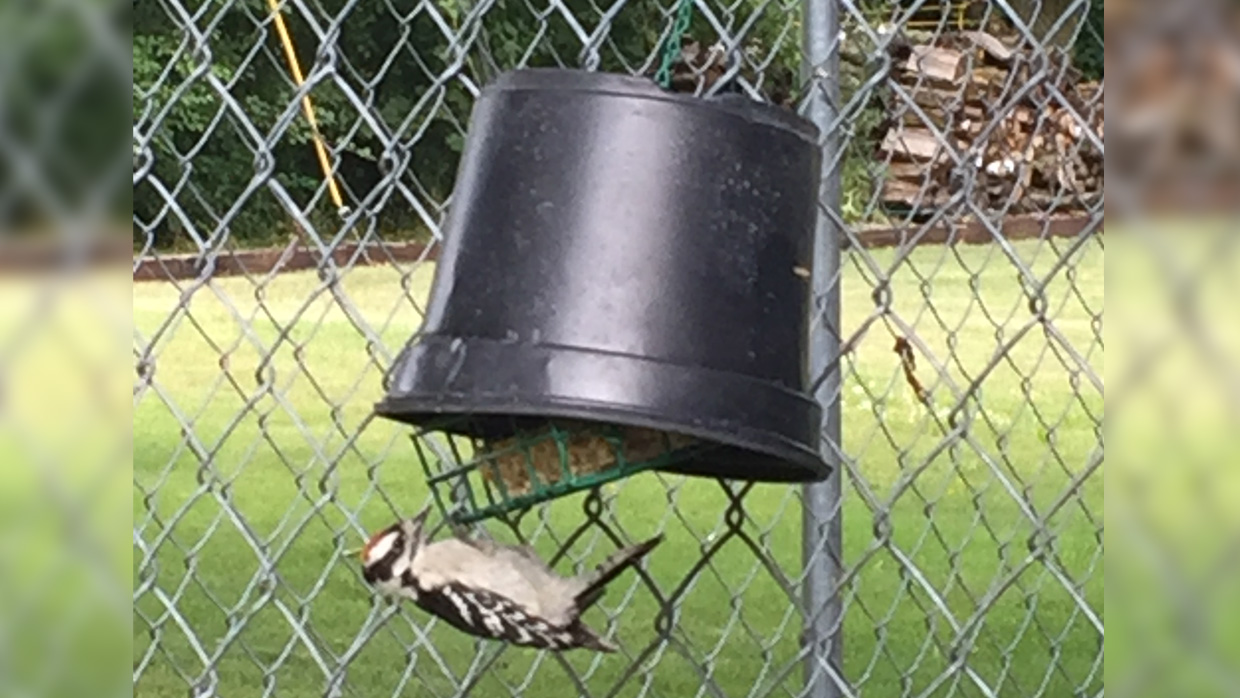 Keep House Sparrows Off Suet Feeders